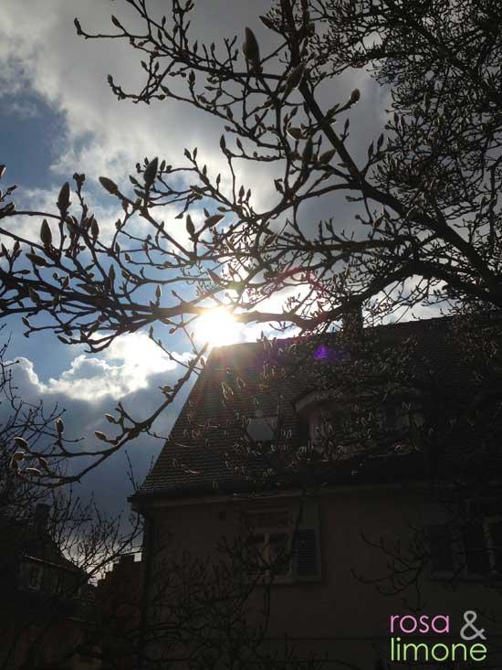Sonnenstrahlen-Magnolienbaum