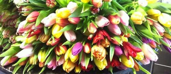 Blumen-BJ
