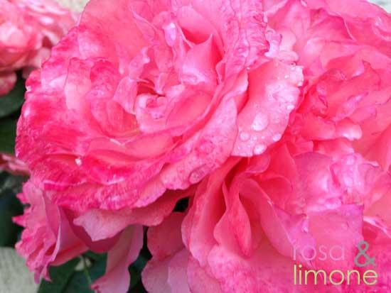Rosen-rosa&limone