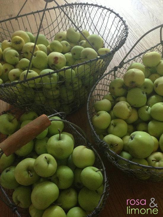 geerntete-Äpfel-rosa&limone