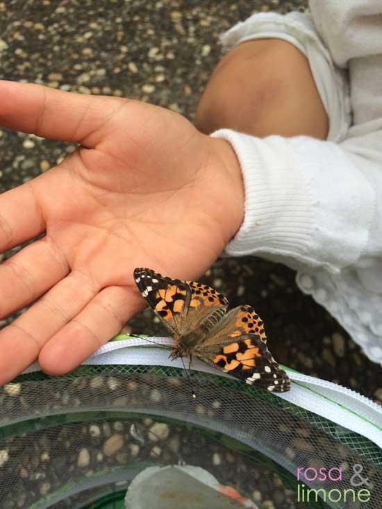 Schmetterlingsgarten-Schmetterling-auf-Hand-rosaundlimone