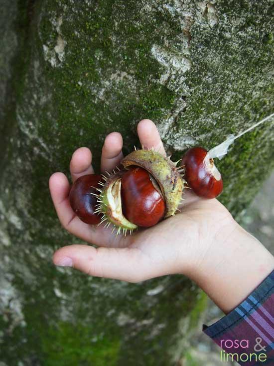 Kastanien-ind-Hand-rosaundlimone