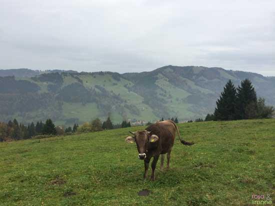 Kuh-im-Allgäu-rosaundlimone