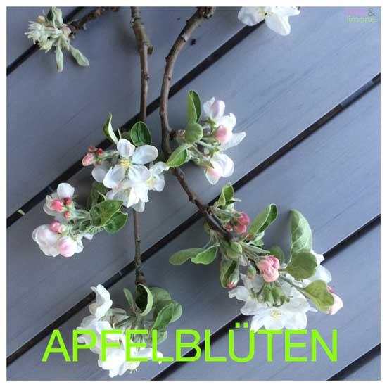 Apfelblueten-rosaundlimone