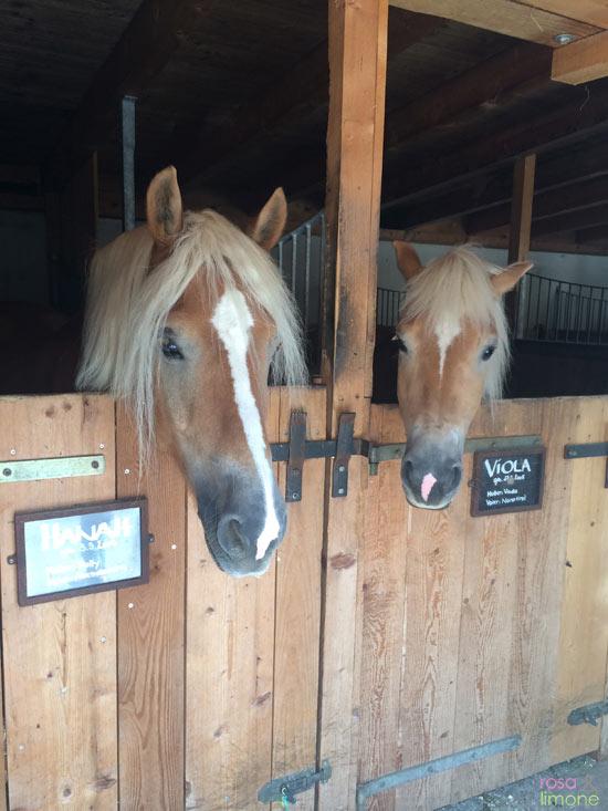 Sporthotel-Achensee-Pferde