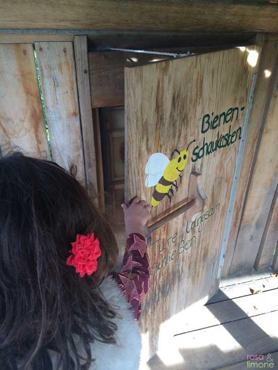 Sonnenhof-Stuttgart-Bienenschaukasten