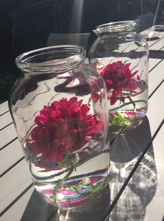 Pfingstrosen-ind-Glas