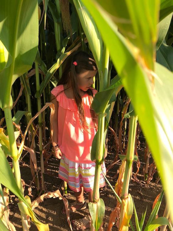 versteckt im Maisfeld