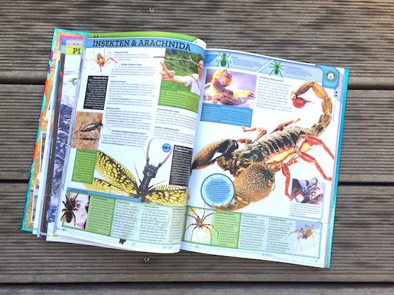 Familienrekorde Guiness Buch der Rekorde Tierrekorde